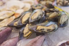 Fresh mussels on ice. Seafood market, seafood delicacies. Street food stock photos