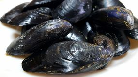 Fresh mussels close up Stock Photos