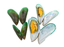 Fresh Mussels Stock Photography