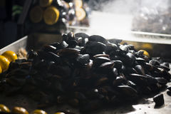 Fresh mussels Stock Image