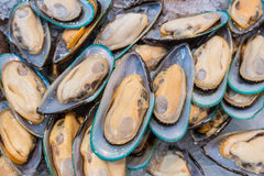 Fresh mussels on a market.  royalty free stock image