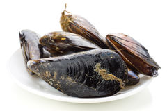Fresh mussels in net  on white Royalty Free Stock Image