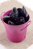 Fresh mussels in a pink bucket Royalty Free Stock Image