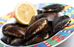 Fresh mussels on plate Stock Images