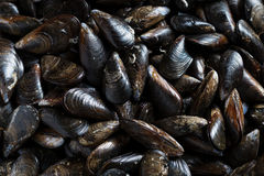 Fresh Mussels ready to cook Stock Photo