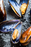Fresh mussels on a rock Royalty Free Stock Photos