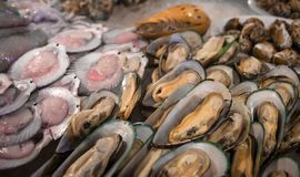 Fresh mussels and scallops on ice. Opened clams Seafood market, seafood delicacies. Street food royalty free stock image