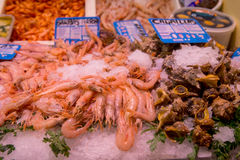 Fresh mussels and shrimps at fish market Stock Images