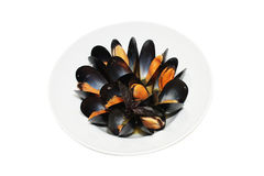 Fresh mussels steamed Royalty Free Stock Image