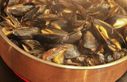 Fresh Mussels Steaming in a Copper Skillet Royalty Free Stock Photo