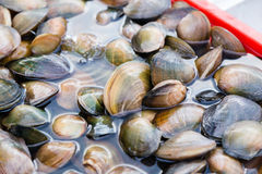 Fresh mussels in water at market Royalty Free Stock Photos