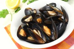Fresh mussels in a white bowl Royalty Free Stock Photography