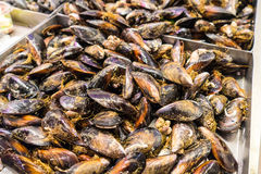 Fresh mussles from the market. stock images
