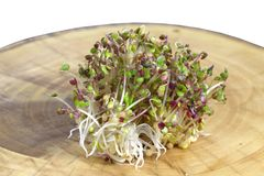 Fresh mustard sprouts. On the trunk Stock Photography