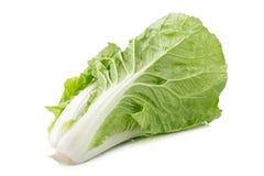 Fresh napa cabbage on white background. Fresh napa cabbage on white background stock photo
