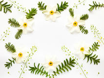 Fresh narcissus flowers leaves and hepherd's purses on white Stock Photo