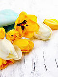 fresh narcissus  and tulips on white wooden background Stock Photos
