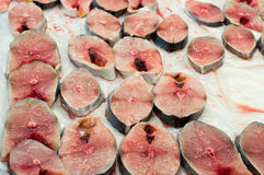 Fresh Narrow-barred Spanish Mackerel Steak. A fresh chopped narrow-barred Spanish mackerel steak in a fish market Stock Image