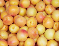 Fresh natural apricot background Stock Image