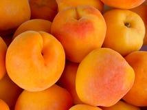 Fresh natural apricots Stock Image