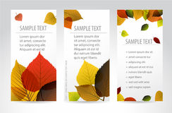 Fresh natural autumn vertical banners with leafs Stock Photo