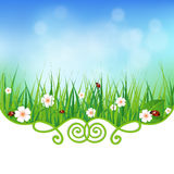 Fresh natural background with grass Royalty Free Stock Images