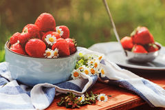 Fresh natural growth strawberries with chamomile flowers in summer garden. In blue plate on wooden table Stock Image