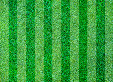 Fresh natural lawn grass Stock Image