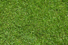 Fresh natural lawn grass field. New grass (turf) playground on a stadium Royalty Free Stock Image