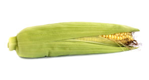 Fresh natural raw corn cobs isolated. On the white background Royalty Free Stock Image
