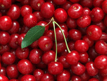 Fresh natural red cherry with green leaf Royalty Free Stock Photo