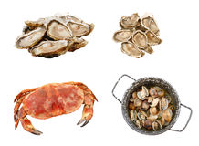 Fresh and natural seafood starters Royalty Free Stock Images