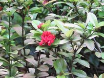 Fresh natural small tree red flower beautiful picture stock images