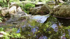 Natural river water. Fresh natural water flowing over rocks , all around plants and flowers , beautiful tree reflections on the water surface , pink flowers stock video