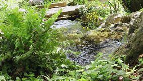 Fresh natural water flows in the countryside. Fresh natural water flowing over rocks , all around plants and flowers , beautiful tree reflections on the water stock video footage
