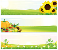 Fresh Nature Banners. Beauty Thanksgiving Nature banners set - vector illustration with rural landscape, sunflowers and ripe harvest Royalty Free Stock Photo