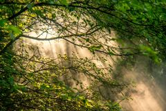 Fresh nature foliage and mist royalty free stock photography