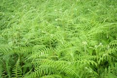 Fresh nature green fern in background. Stock Photos