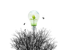 Fresh nature in Light bulb and dry environment on white background Stock Photography