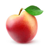 Fresh nectarine peach Stock Photography
