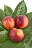 Fresh nectarines Royalty Free Stock Photo