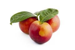 Fresh nectarines Stock Images