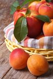 Fresh nectarines and apricots in a basket closeup vertical Stock Photo