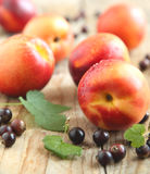 Fresh nectarines and black current Stock Images