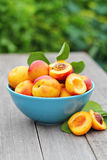 Fresh nectarines in a bowl Royalty Free Stock Photos