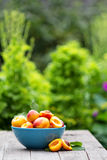 Fresh nectarines in a bowl Royalty Free Stock Photography