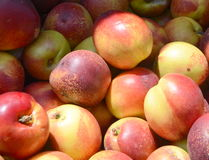 Fresh Nectarines at a Farmers Market. Display of whole, sometimes imperfect, nectarines at a stall in Mahane Yehuda market. Natural lighting Royalty Free Stock Photos