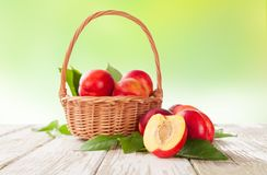 Fresh nectarines Stock Photo