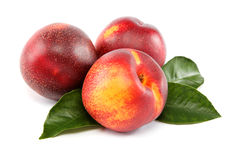 Fresh nectarines. Royalty Free Stock Photography