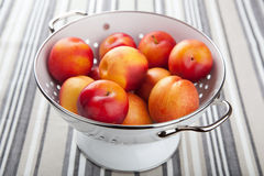 Fresh nectarines and plums Royalty Free Stock Photos